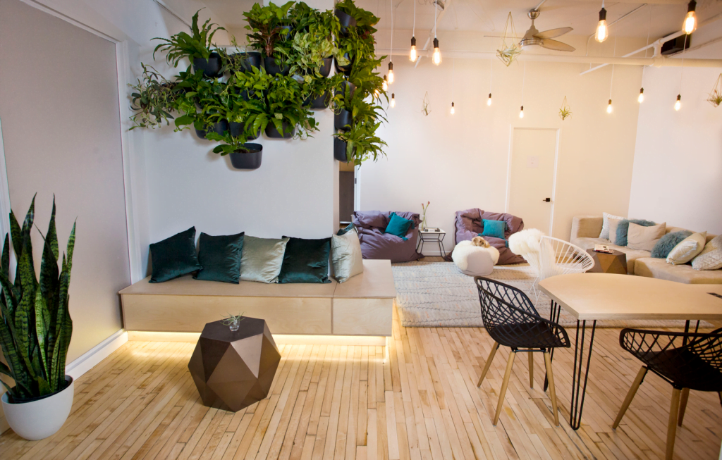 A Space for Healing, Rejuvination and Peace: City Wellness Collective