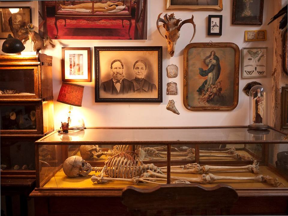 Culture Music Morbid Anatomy Museum Skeletons