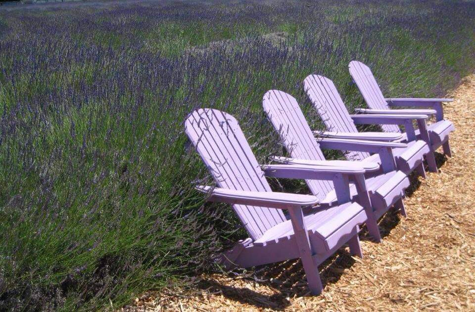 Day Trips and Travels Lavender by the Bay Chairs