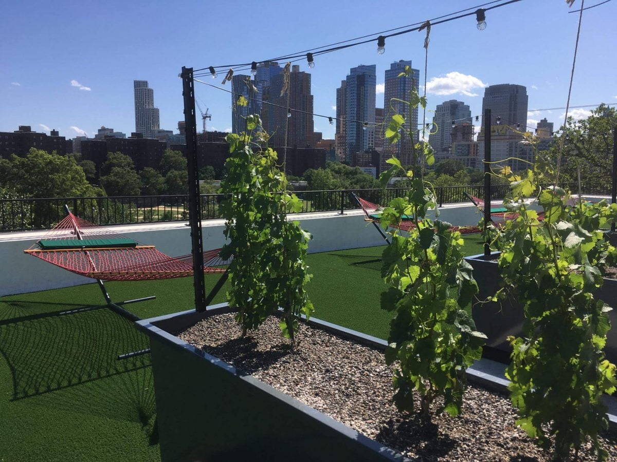 Events On Going Rooftop Reds Vineyard Brooklyn Grapes