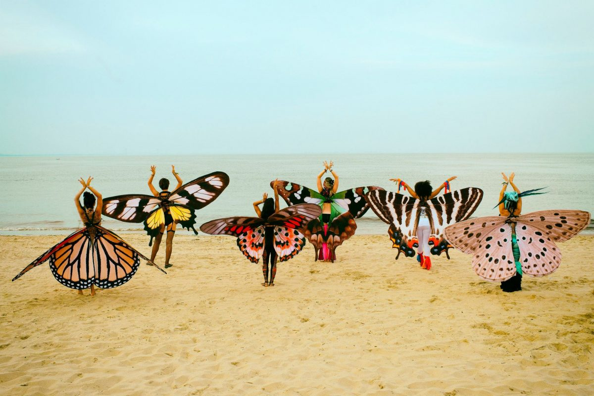 Events Up Coming Gratitude Migration 2016 Beach Butterflies