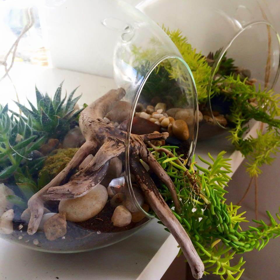 Shop Home And Kids Flora Brook NYC Terrarium