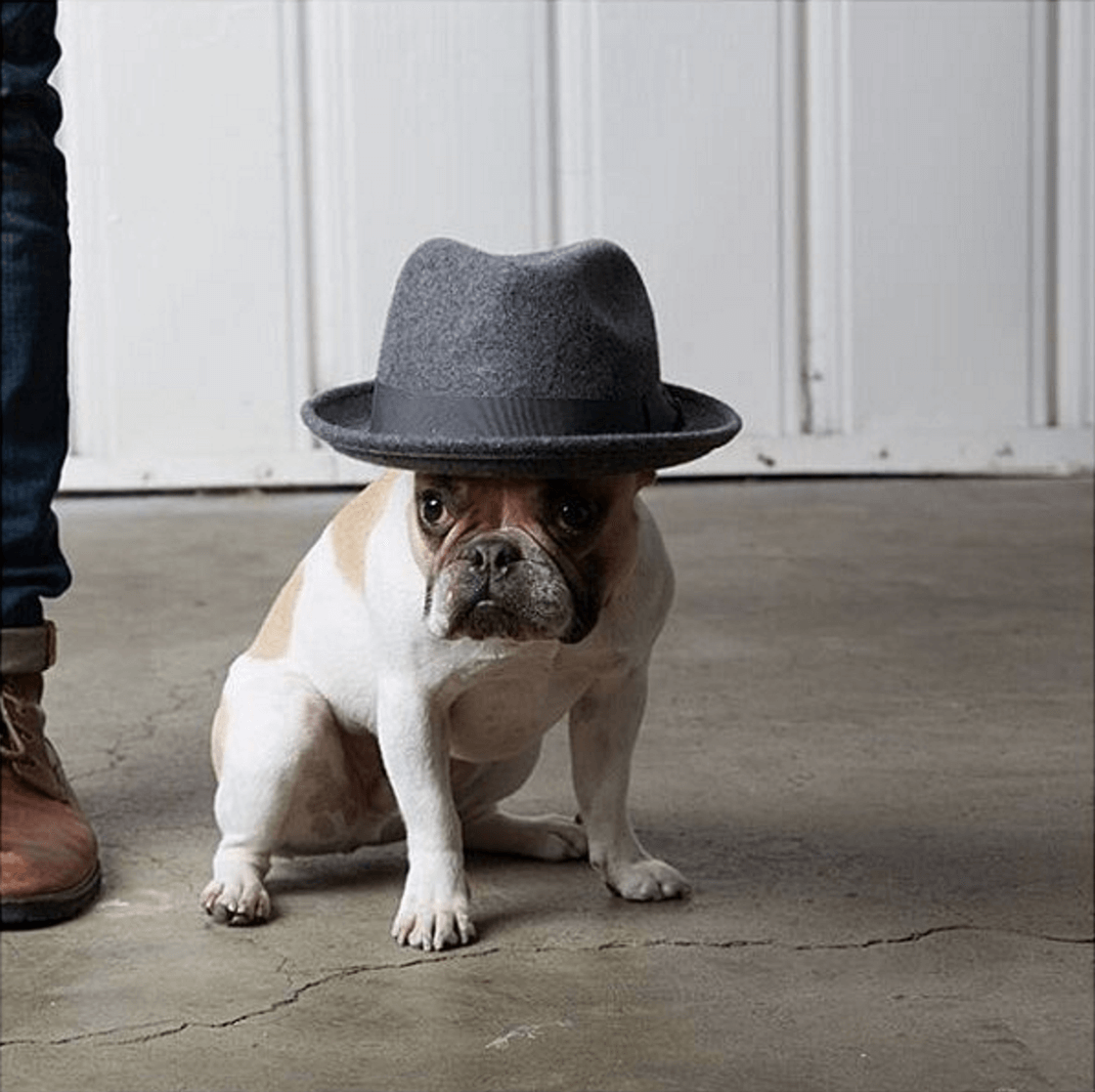Shop Ladies and Gents Goorin Bros Dog Hat