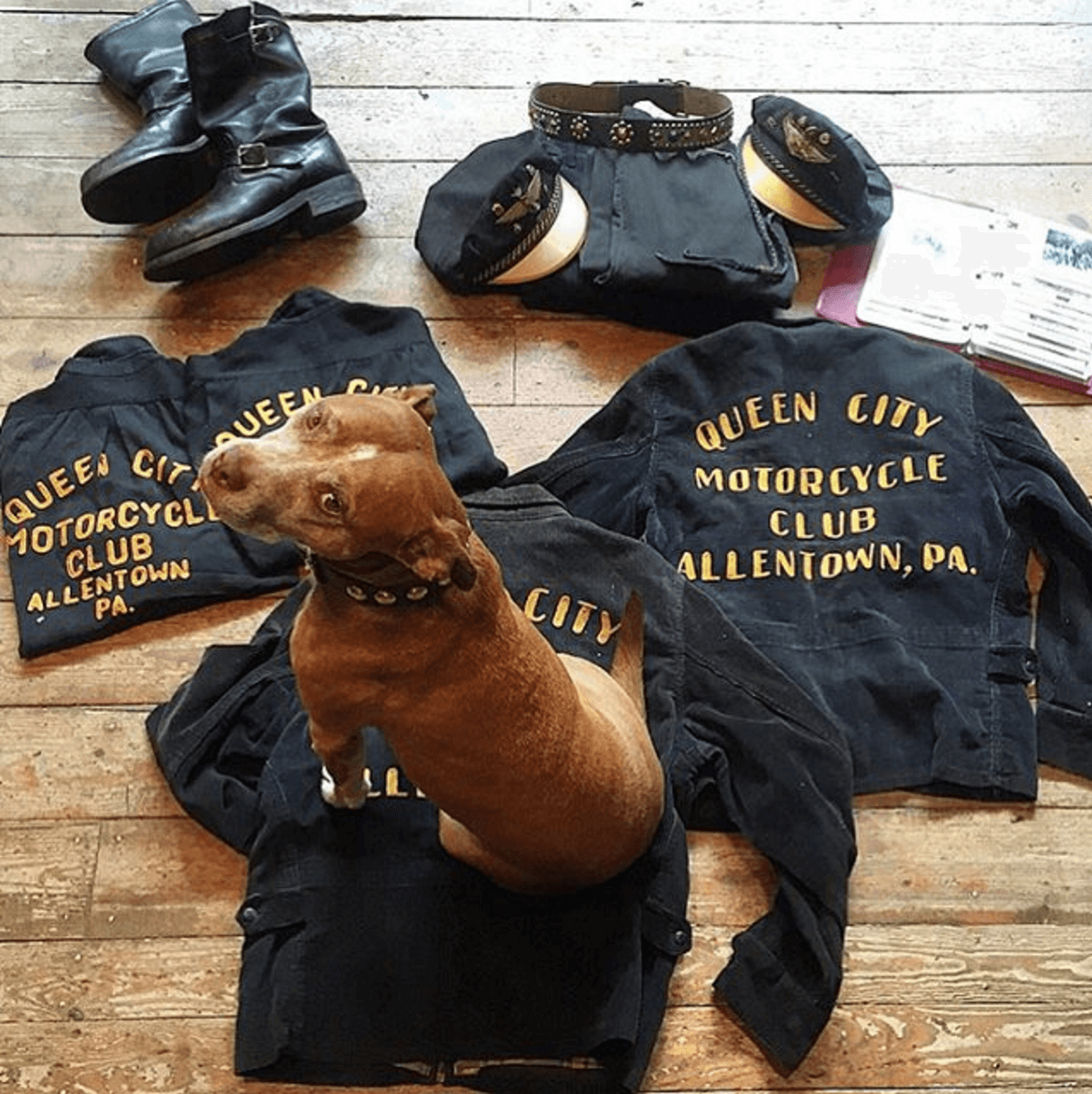 Shop Ladies and Gents Stock Vintage Motorcycle Club Dog