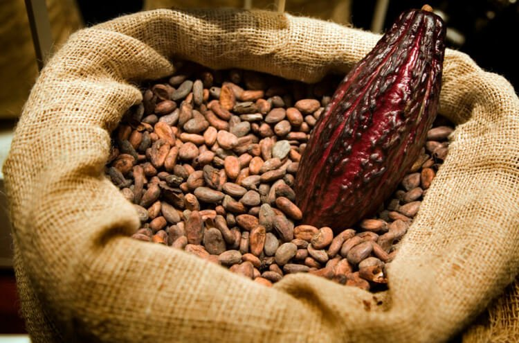 Shop Specialties Cacao Prieto Chocolate Cacao Beans