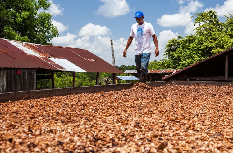 Shop Specialties Cacao Prieto Chocolate Dominican Republic Sourcing