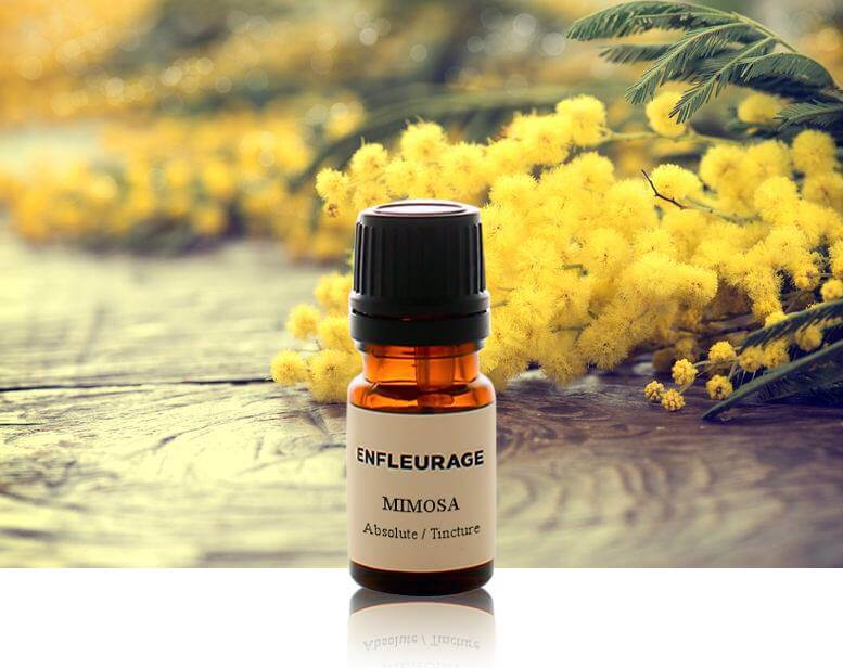 Shop Specialties Enfleurage Essencial Oils in New York Mimosa