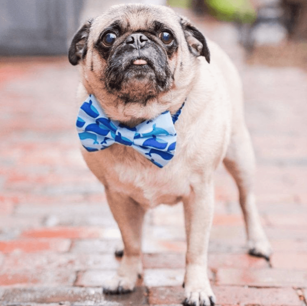 BTSNYC Social Responsibility Pug Squad Puppy Tie