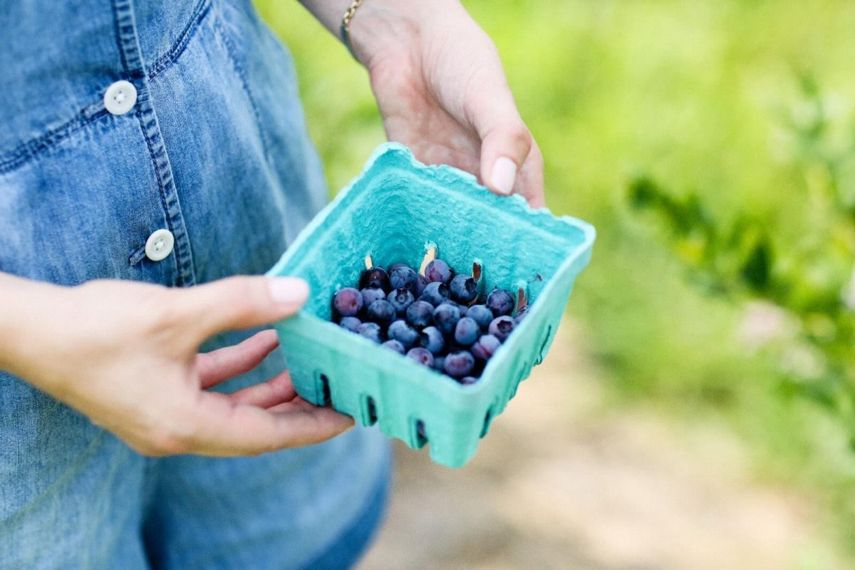 Curiosities Insider Interviews Carly A Heitlinger Fishkills Farms Bluberries