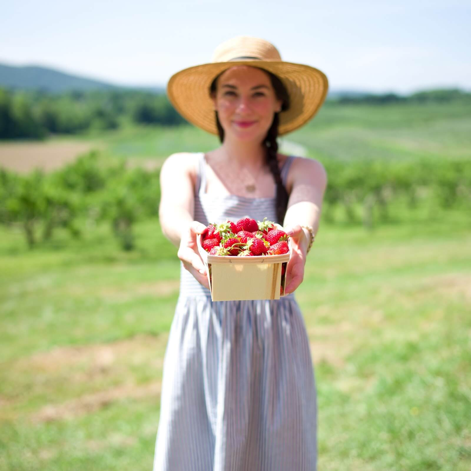 Curiosities Insider Interviews Carly A Heitlinger Fishkills Farms Strawberry Picking