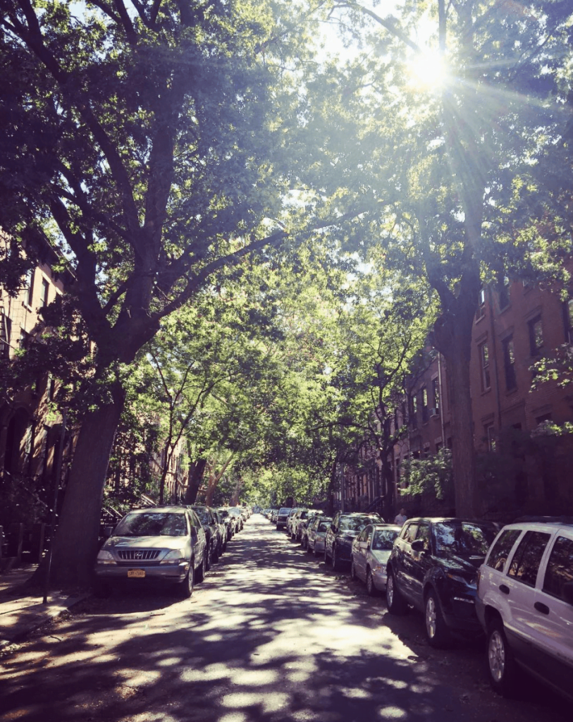 Curiosities Our Bucket Lists Carroll Gardens Vertical