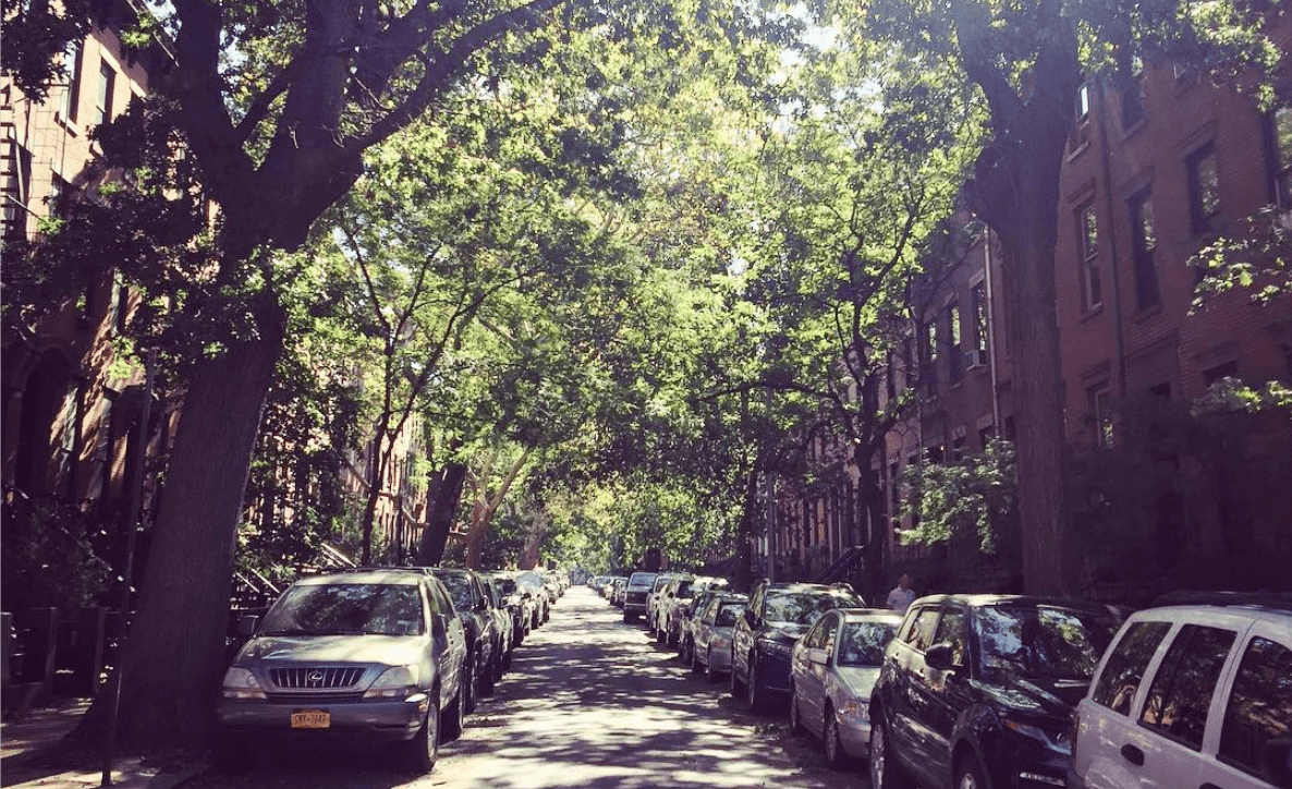 Curiosities Our Bucket Lists Carroll Gardens