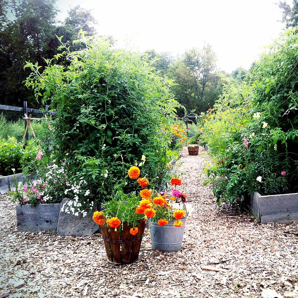 Curiosities Insider Interviews Juliette Hermant Narrowsburg Tusten Heritage Community Garden Flowers