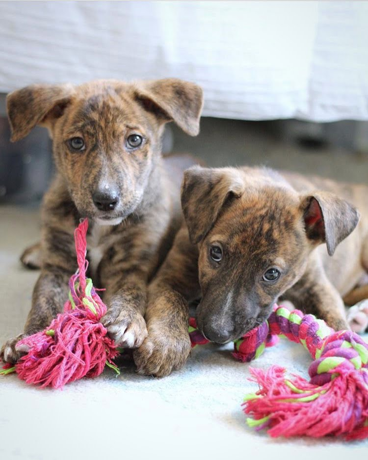 Social Responsibility Animal Haven Non Profit Pet Adoption by Tedi Sarah