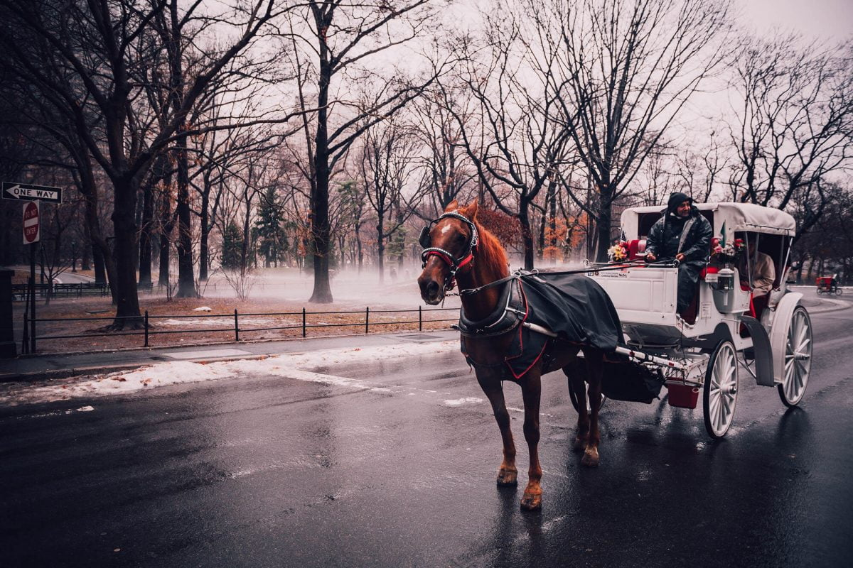 16 Things No One Ever Tells You About NYC Part 3 Horse Carriages