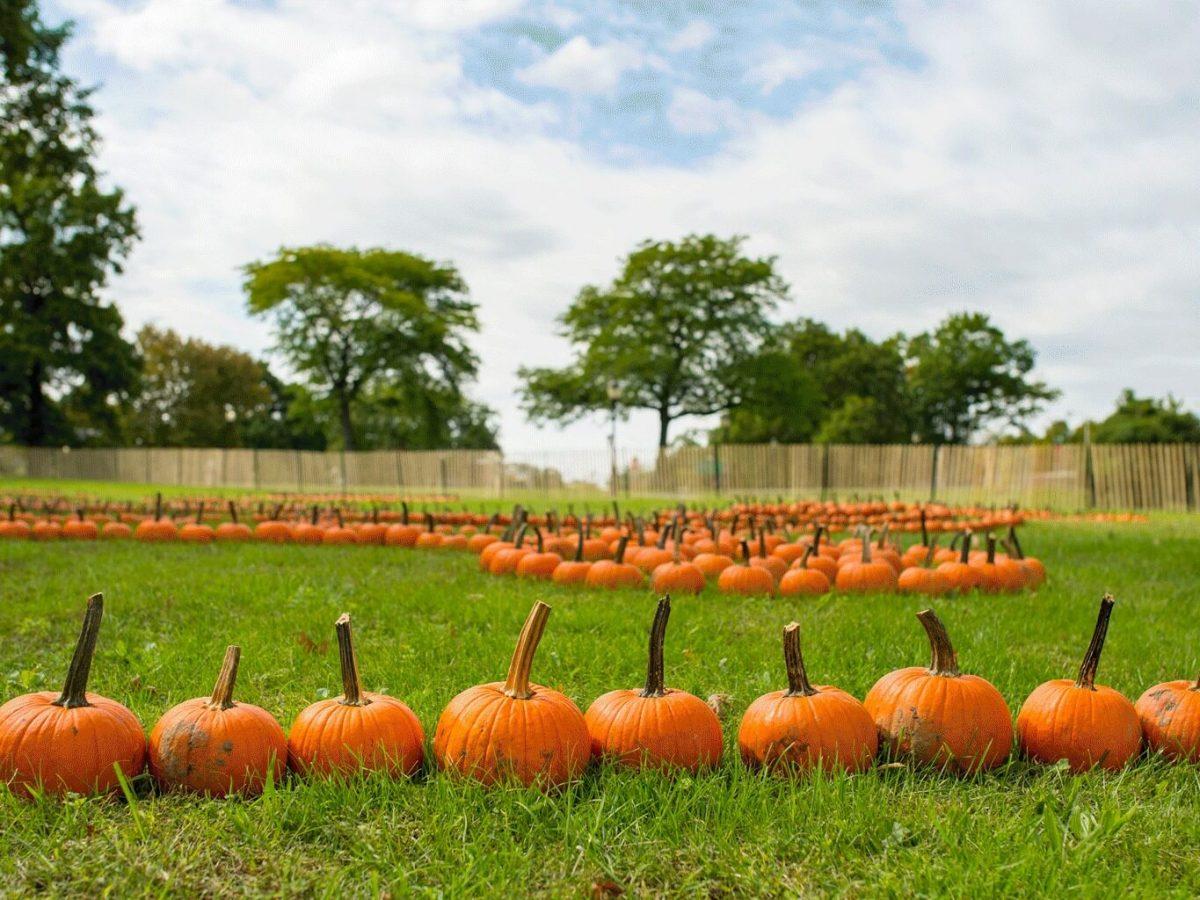 Events Up Coming NYC Halloween Parties Queens Botanical Garden